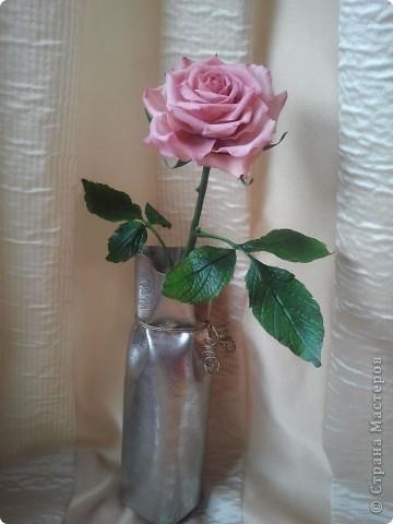 Вот она-моя первая роза!Еще масло на листьях не просохло,а я уже ее фотографировать!))))) фото 1