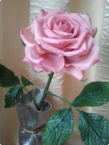 Вот она-моя первая роза!Еще масло на листьях не просохло,а я уже ее фотографировать!))))) фото 3