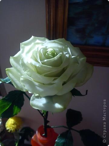 Вот она-моя первая роза!Еще масло на листьях не просохло,а я уже ее фотографировать!))))) фото 5