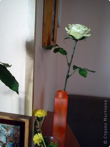 Вот она-моя первая роза!Еще масло на листьях не просохло,а я уже ее фотографировать!))))) фото 4