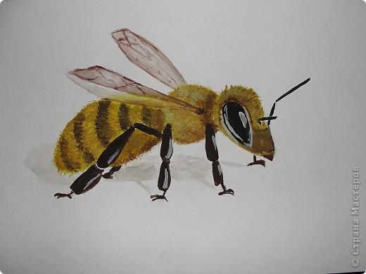 акварелька, пчелка