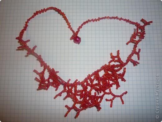 Красные кораллы фото 1