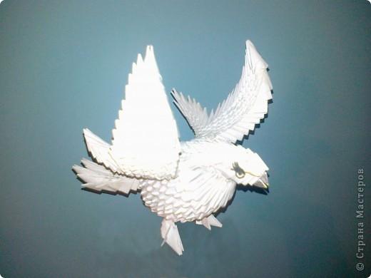 Голубь - птица мира!