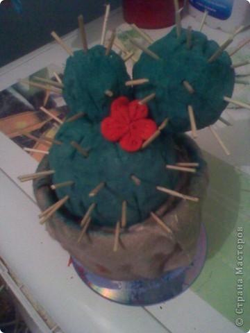 Цветущий Кактус фото 1