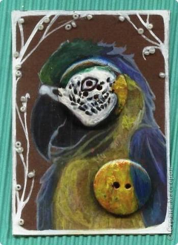 Наша новая серия.  Птицы - любимые существа многих народов. Им поклонялись, обожествляли, охотились на них, одомашнивали и просто любили.  № 1 фото 16