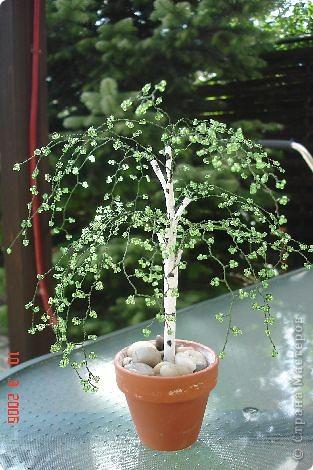 Деревце- берёзка, подаренно :)