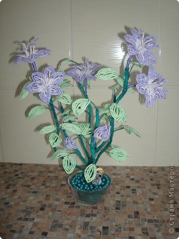 Просто цветочек. фото 1