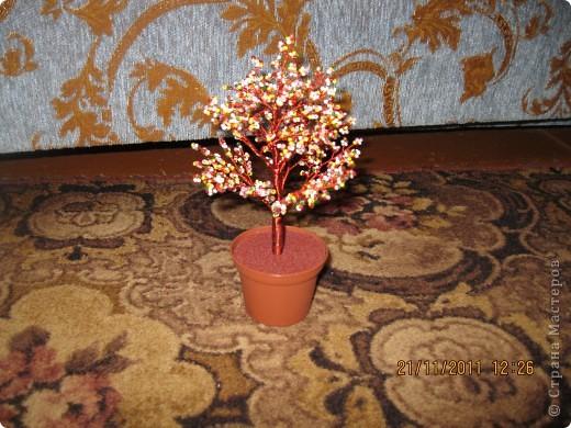 цветной лес фото 10