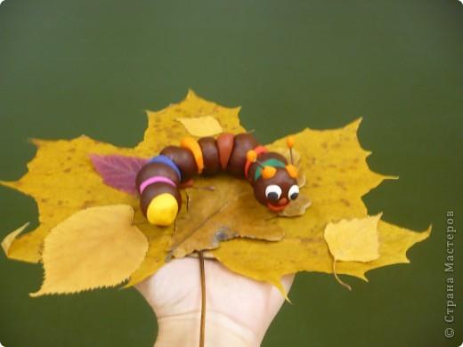 Весёлая гусеничка! фото 1