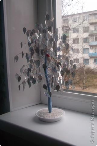 серебрянное дерево фото 1