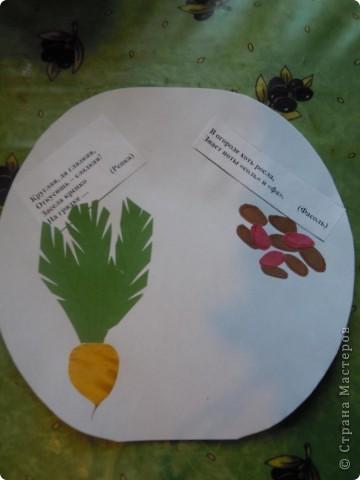 Сделали с дочкой первоклассницей для школы такую вот книжечку в виде арбуза с загадками про урожай . фото 5