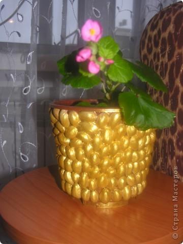 Горшок из фисташек+золотая краска сверху)
