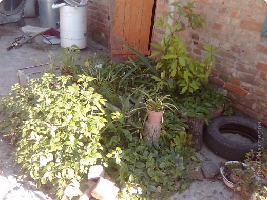 Во дворе остался не забетонированный кусочек земли где раньше росло дерево. 1- выкладываем контур камнями. ( заднюю стенку я выложила кирпичами). 2- засыпаем землей... фото 5