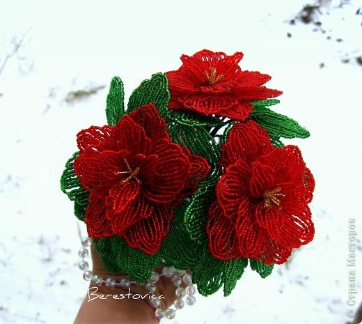 Захотелось сделать вот такой цветок к новому году, называется Пуансеттия или Рождественская звезда фото 4