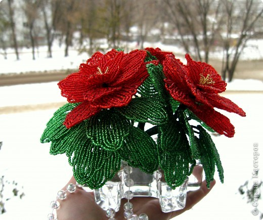 Захотелось сделать вот такой цветок к новому году, называется Пуансеттия или Рождественская звезда фото 3