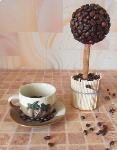 """Добрый день, всем, всем, всем!!! Вот и у меня,как и у большинства жителей Страны, """"проросло"""" кофейное зернышко!      фото 1"""