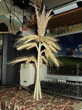 Дидух (еще его называют дидо, дидочок, сноп-рай, коляда, колидник) – это перевязанный особым образом, сноп из последнего или из лучшего снопа собранного урожая пшеницы, овса, ржи или льна, украшенный сухоцветиями или ленточками.  Количество пучков (колосьев в пучке) должно быть кратно семи, поскольку Дидух символизирует семь колен рода.  Традиция ставить в доме Дидуха происходит  еще с очень давних  дохристианских времен. Став украшением каждой украинской хаты, он с одной стороны являлся  жертвоприношением силам природы, а с другой - символизировал «деда», родоначальника семьи, был воплощением бога Коляды, местом пребывания духов дедов-прадедов, опекунов и покровителей своего дома, символом сохранения традиций и памяти о предках.      Дидуха начинали плести после сбора урожая и хранили до Рождества. В Святой вечер хозяин дома торжественно заносил его в хату, приговаривая: «Дідух до хати - біда із хати». Дидуха ставили на солому на почетное место на покути (в красном углу) под иконами возле праздничного стола. Его присутствие привносило в семью праздничное настроение, уют и спокойствие.  фото 1