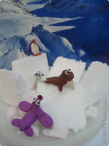 В далекой Антарктиде... фото 1
