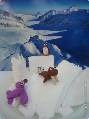 В далекой Антарктиде... фото 2