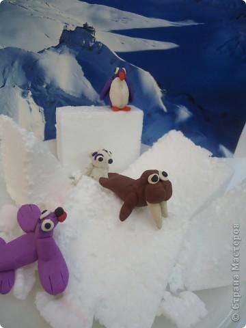 В далекой Антарктиде... фото 3