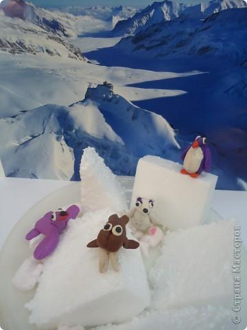 В далекой Антарктиде... фото 4