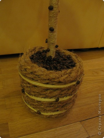 Кофейное дерево фото 3