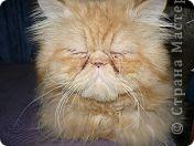 Рыжый кот. фото 2