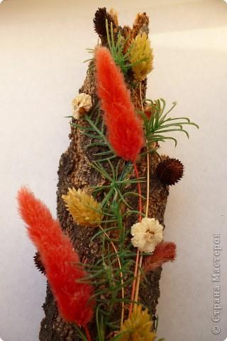 Цветы на коре фото 2