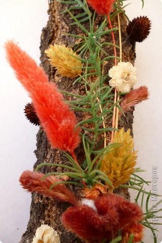 Цветы на коре фото 3