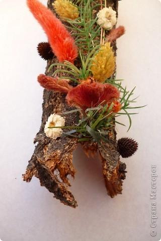 Цветы на коре фото 4