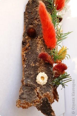 Цветы на коре фото 5