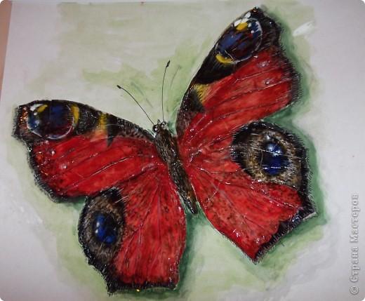 Размер бабочки -25 см размах крыльев фото 1
