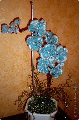 """Орхидея """"ОБЛАКА"""". фото 1"""