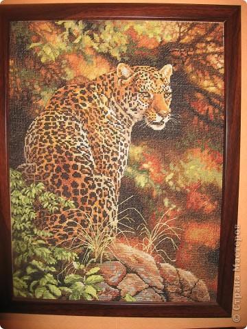 Вот такого леопарда я вышила своему любимому мужу на день рождения. размер 30 х 22 см вышивала 6 месяцев. Результат радует до сих пор в рамке на стене.