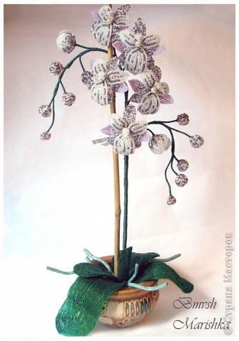 Давно я заглядывалась на бисерные орхидеи, и мечтала, чтобы такая же красавица поселилась у меня. И моя мечта сбылась! Сплела я свою Чаровницу на совместном плетении с Танюшей - goldi на Конфеткином форуме. Танечка, огромное тебе спасибо! Высота орхидеи с горшочком - 53 см. фото 3