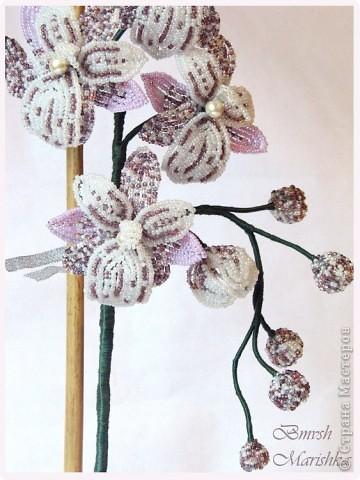Давно я заглядывалась на бисерные орхидеи, и мечтала, чтобы такая же красавица поселилась у меня. И моя мечта сбылась! Сплела я свою Чаровницу на совместном плетении с Танюшей - goldi на Конфеткином форуме. Танечка, огромное тебе спасибо! Высота орхидеи с горшочком - 53 см. фото 2