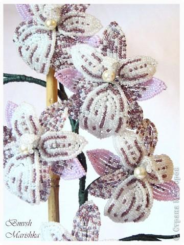Давно я заглядывалась на бисерные орхидеи, и мечтала, чтобы такая же красавица поселилась у меня. И моя мечта сбылась! Сплела я свою Чаровницу на совместном плетении с Танюшей - goldi на Конфеткином форуме. Танечка, огромное тебе спасибо! Высота орхидеи с горшочком - 53 см. фото 5