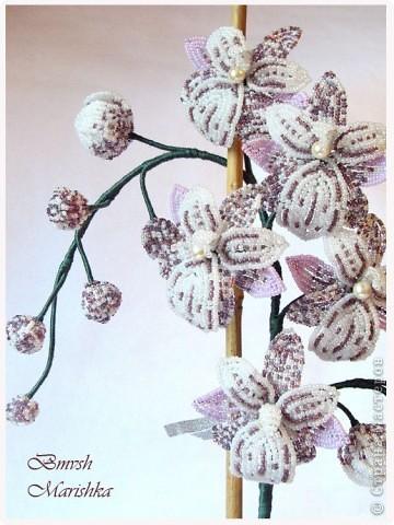 Давно я заглядывалась на бисерные орхидеи, и мечтала, чтобы такая же красавица поселилась у меня. И моя мечта сбылась! Сплела я свою Чаровницу на совместном плетении с Танюшей - goldi на Конфеткином форуме. Танечка, огромное тебе спасибо! Высота орхидеи с горшочком - 53 см. фото 1