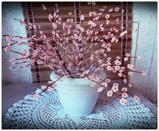 Приветствую всех замечательных жителей СМ!!!Решила показать свой любимый, вечноцветущий куст сакуры.Дерева как такового не получилось. фото 1