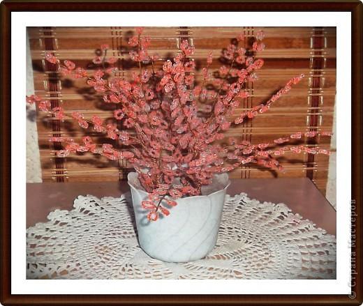 Приветствую всех замечательных жителей СМ!!!Решила показать свой любимый, вечноцветущий куст сакуры.Дерева как такового не получилось. фото 2