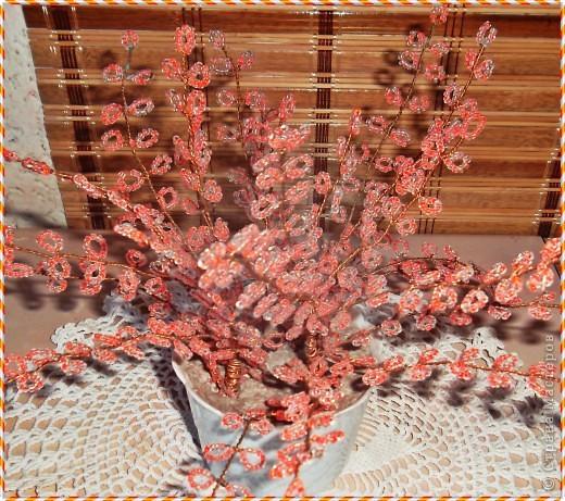 Приветствую всех замечательных жителей СМ!!!Решила показать свой любимый, вечноцветущий куст сакуры.Дерева как такового не получилось. фото 3