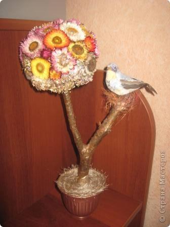 """""""Бессмертное"""" дерево или дерево из бессмертников"""
