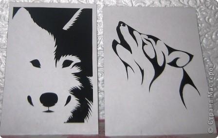 Ой, что-то меня на волков потянуло, видно сказывается тамбовское происхождение :-))) фото 1