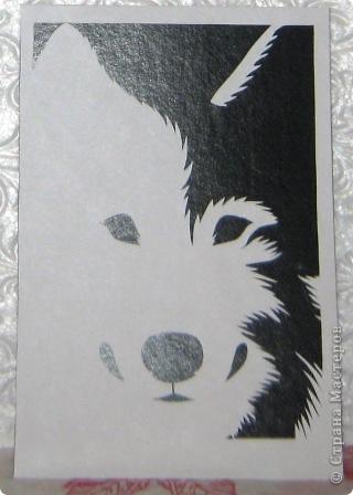 Ой, что-то меня на волков потянуло, видно сказывается тамбовское происхождение :-))) фото 2