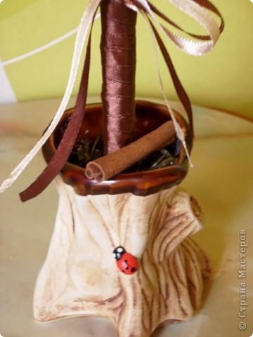 Ураааааа!!! Мое кофейное деревцо готово, чему я очень и очень рада!!!  фото 2