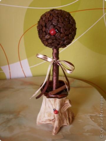 Ураааааа!!! Мое кофейное деревцо готово, чему я очень и очень рада!!!  фото 1