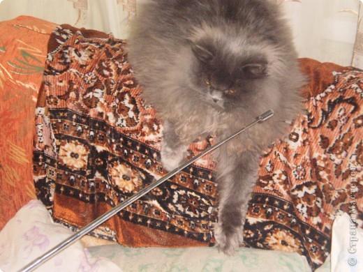 Любимица всей нашей семьи - персидская кошка Мася. Ей 1г.9мес. фото 4
