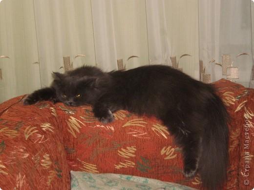 Любимица всей нашей семьи - персидская кошка Мася. Ей 1г.9мес. фото 1