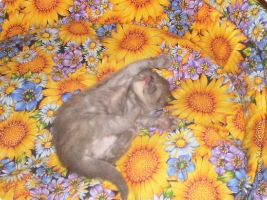 Любимица всей нашей семьи - персидская кошка Мася. Ей 1г.9мес. фото 9