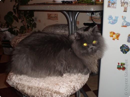 Любимица всей нашей семьи - персидская кошка Мася. Ей 1г.9мес. фото 6
